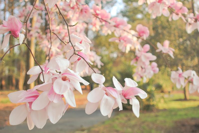 Memories of a Spring