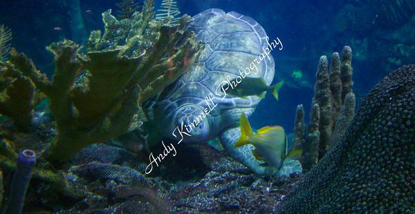 turtle-0763
