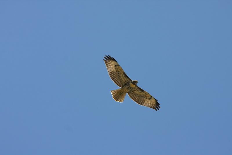Hawk;slideshow