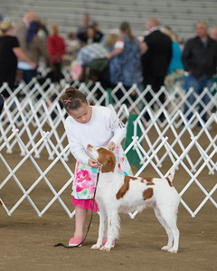 Madi showing Dottie, GCH Brigade's Look At Me Now in Best of Breed Class