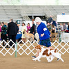 Best of Breed all 4 days Joe