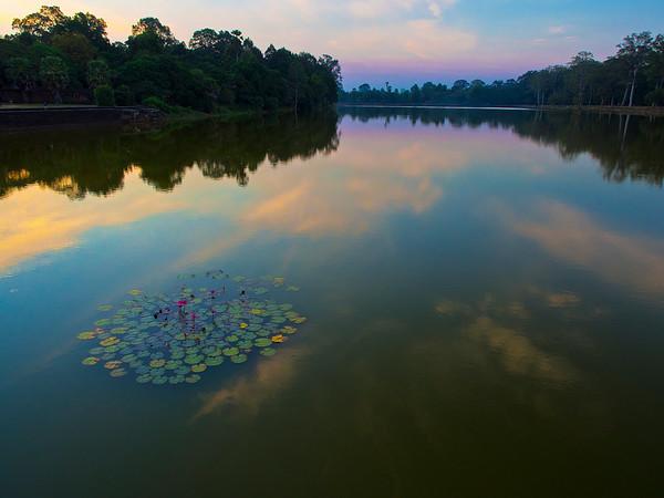 Lilies, Angkor Wat moat