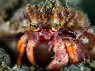 Hermit eyes