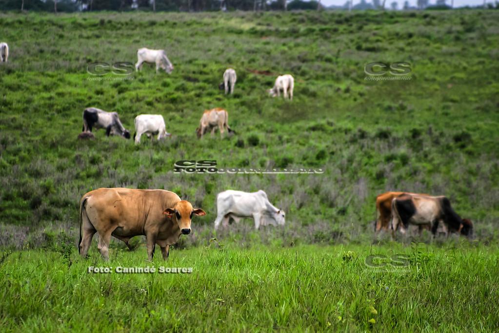 Gado na Fazenda