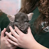 Animal Adventures out of Bolton visited the Fitchburg Public Library on Friday, Dec. 27, 2019 with some of their animals. SENTINEL & ENTERPRISE/JOHN LOVE
