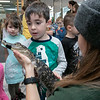 Animal Adventures out of Bolton visited the Fitchburg Public Library on Friday, Dec. 27, 2019 with some of their animals.Emmett Lowe, 5, from Fitchburg holds an American alligator during Animal Adventures visit. SENTINEL & ENTERPRISE/JOHN LOVE