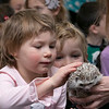 Animal Adventures out of Bolton visited the Fitchburg Public Library on Friday, Dec. 27, 2019 with some of their animals. Ellen Primmer, 4, of Fitchburg pets the hedgehog that they had brought with them to the library. SENTINEL & ENTERPRISE/JOHN LOVE