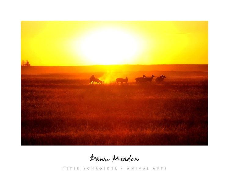 Dawn Meadow - Animal Arts by Peter Schroeder