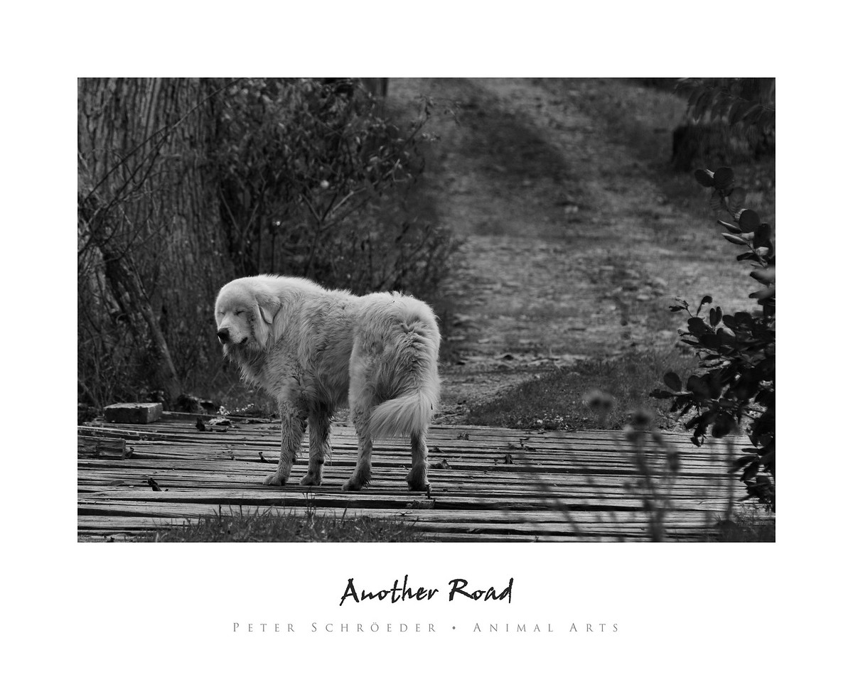 Another Road - Animal Arts by Peter Schroeder