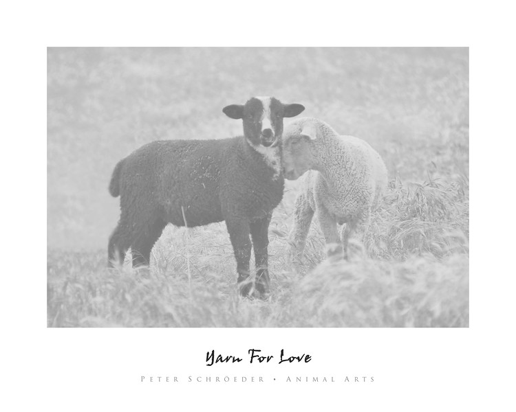 Yarn For Love - Animal Arts by Peter Schroeder