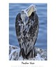 Feather Vase - Animal Arts by Peter Schroeder