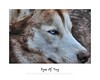 Eyes Of Troy - Animal Arts by Peter Schroeder