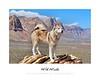 Wild Winds - Animal Arts by Peter Schroeder