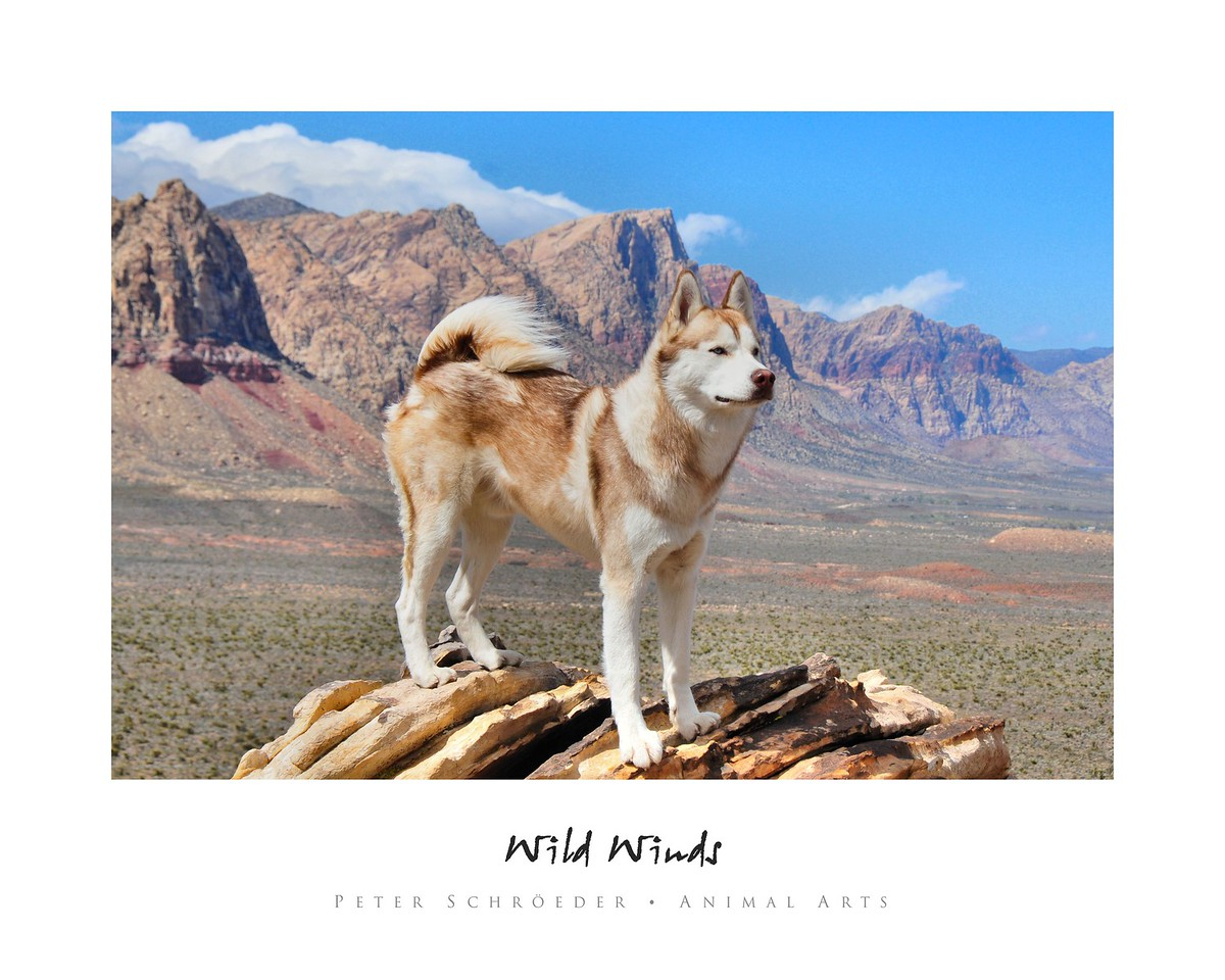Wild Winds - Animal Arts by Peter Schroeder