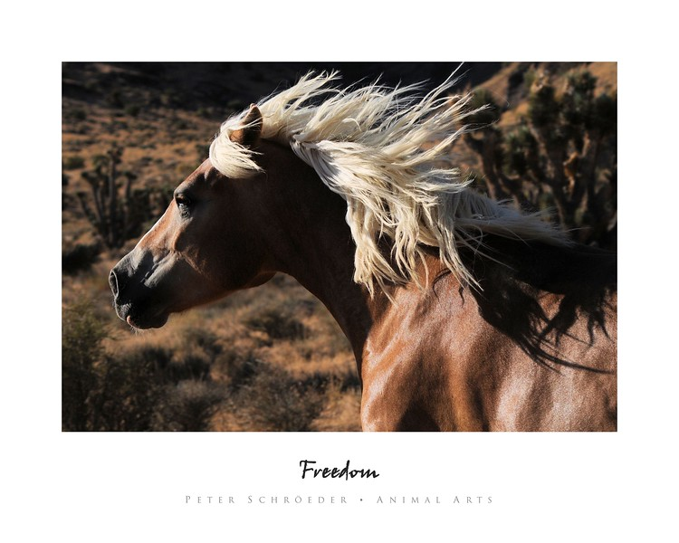 Freedom - Animal Arts by Peter Schroeder