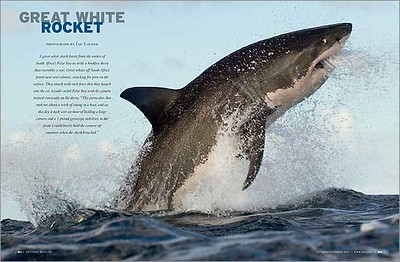 Great_White_Shark_ON07-S.jpg