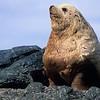 Sea lion Basking