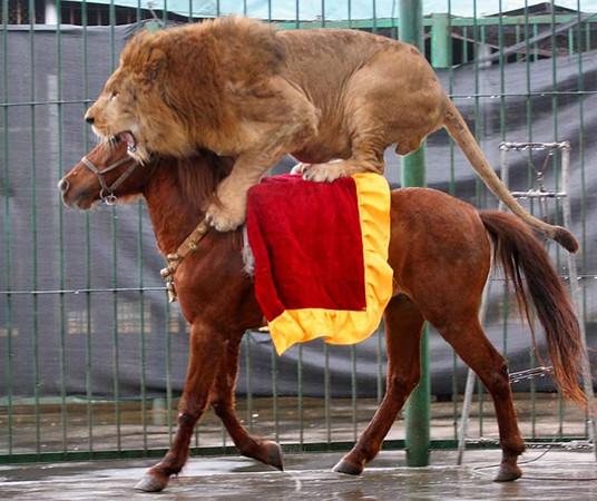 lionridinghorse-M.jpg