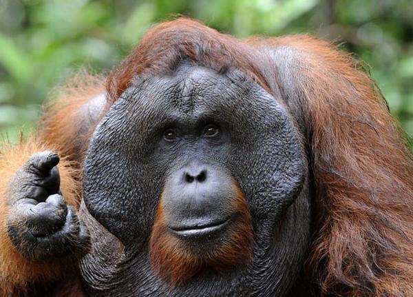 3_orangutan-M.jpg