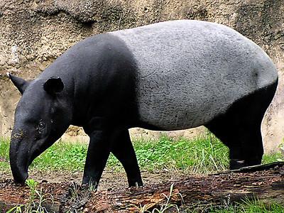 m-tapir_img01-l-S.jpg