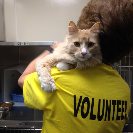 Volunteer cuddles for evacuated cat