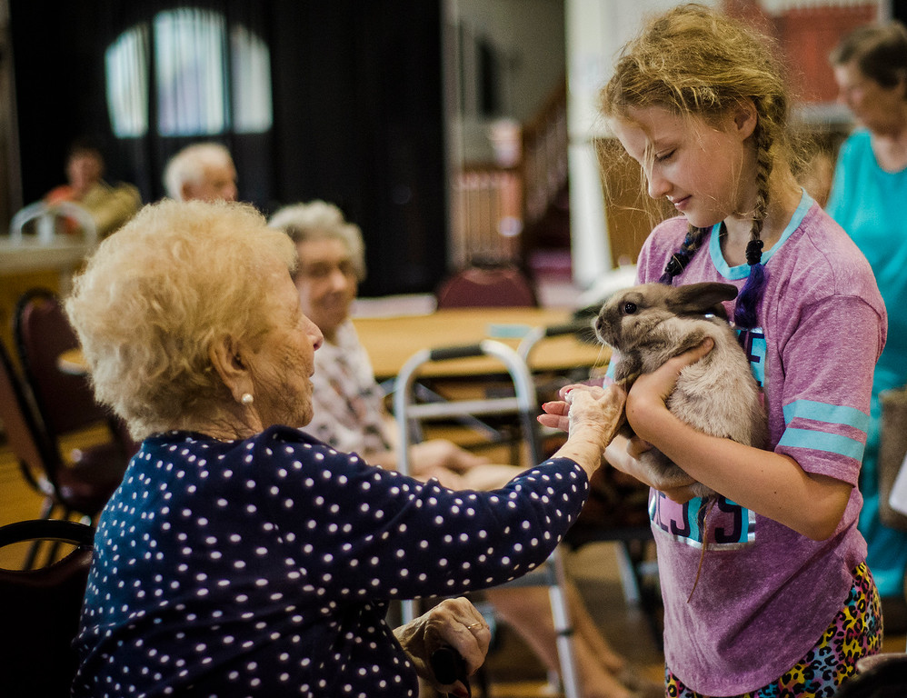 . Annabella Olcott, 10, brings a baby bunny around to greet guests as the Winchendon-based Animal Craze traveling petting zoo  visited the Fitchburg Senior Center on Wednesday, July 12, 2017. SENTINEL & ENTERPRISE / Ashley Green