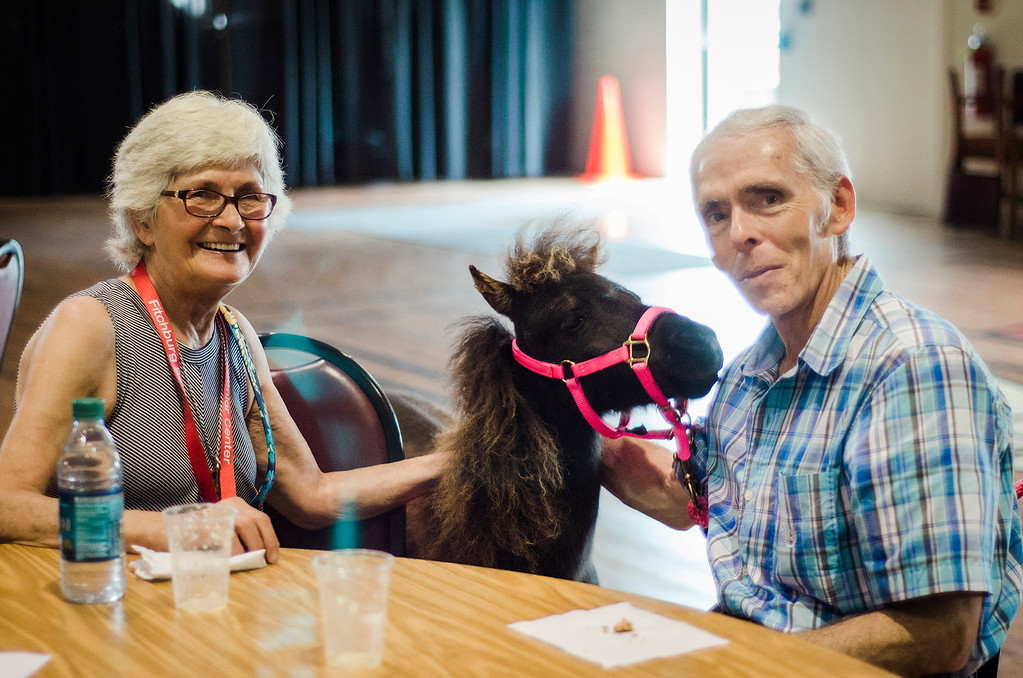 . Elaine LeGay and Robert Caron greet Mocha the mini horse as the Winchendon-based Animal Craze traveling petting zoo  visited the Fitchburg Senior Center on Wednesday, July 12, 2017. SENTINEL & ENTERPRISE / Ashley Green