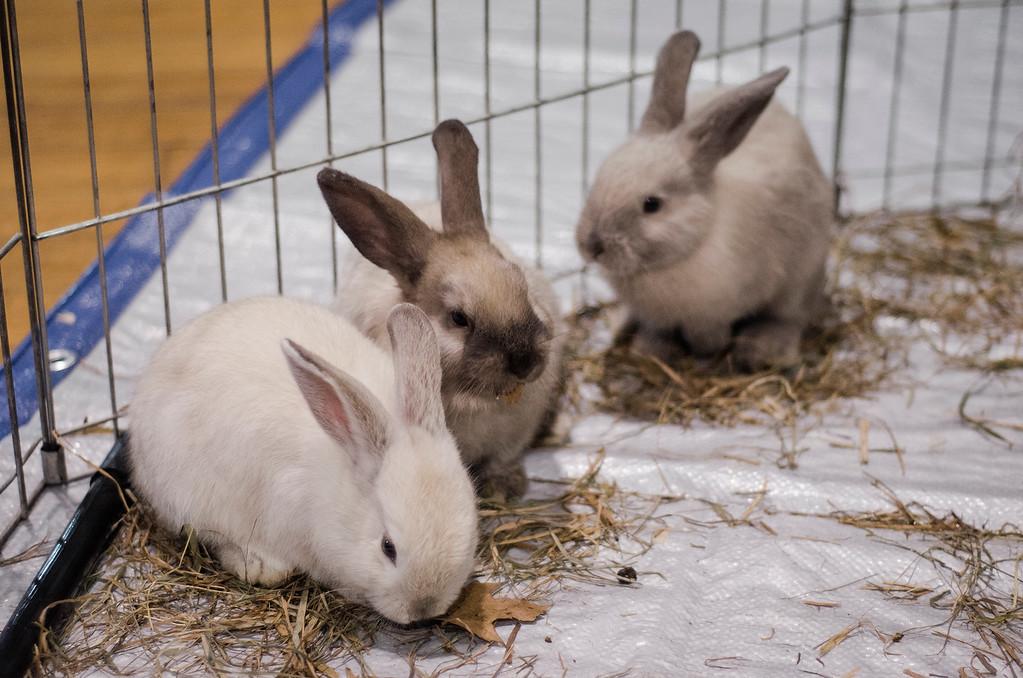 . The Winchendon-based Animal Craze traveling petting zoo visited the Fitchburg Senior Center on Wednesday, July 12, 2017. SENTINEL & ENTERPRISE / Ashley Green