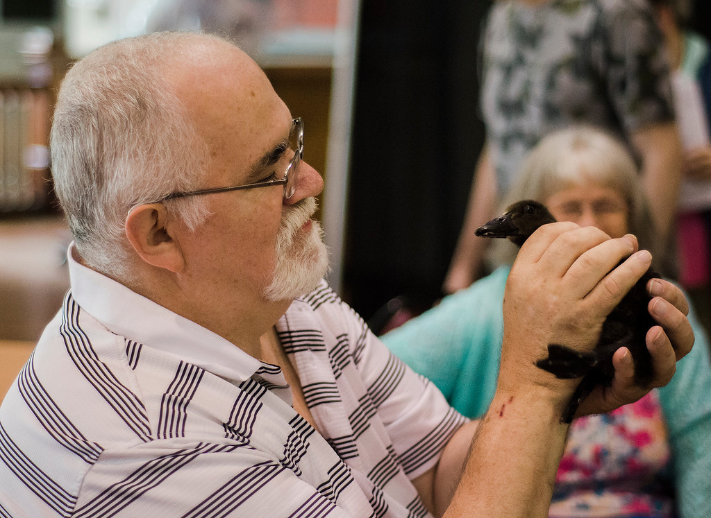 . Ed Daniels holds a baby duck from the Winchendon-based Animal Craze traveling petting zoo that visited the Fitchburg Senior Center on Wednesday, July 12, 2017. SENTINEL & ENTERPRISE / Ashley Green