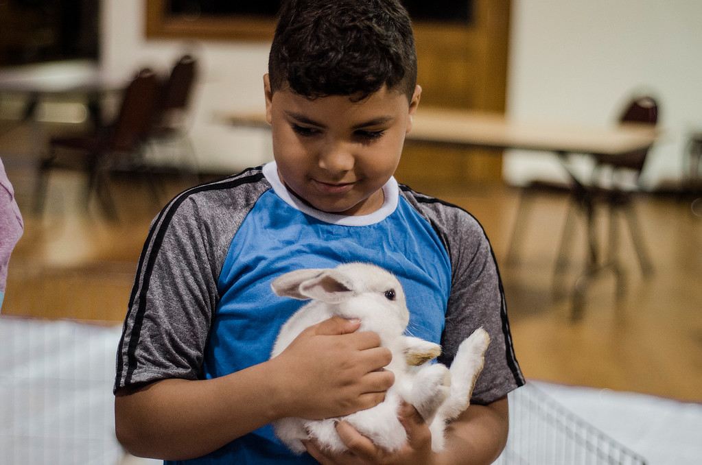. Hector Mayoral, 8, holds a bunny as the Winchendon-based Animal Craze traveling petting zoo  visited the Fitchburg Senior Center on Wednesday, July 12, 2017. SENTINEL & ENTERPRISE / Ashley Green