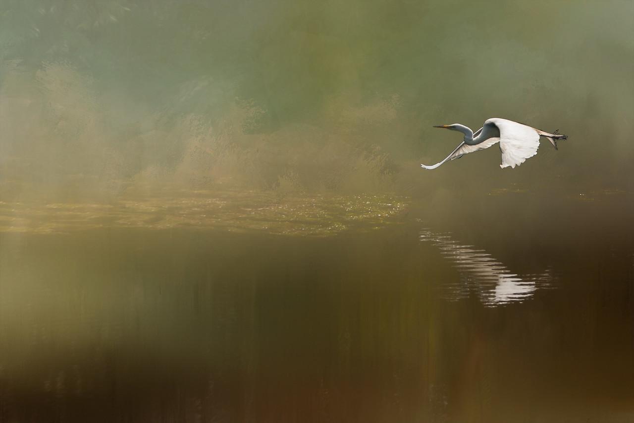 Egret Flyover
