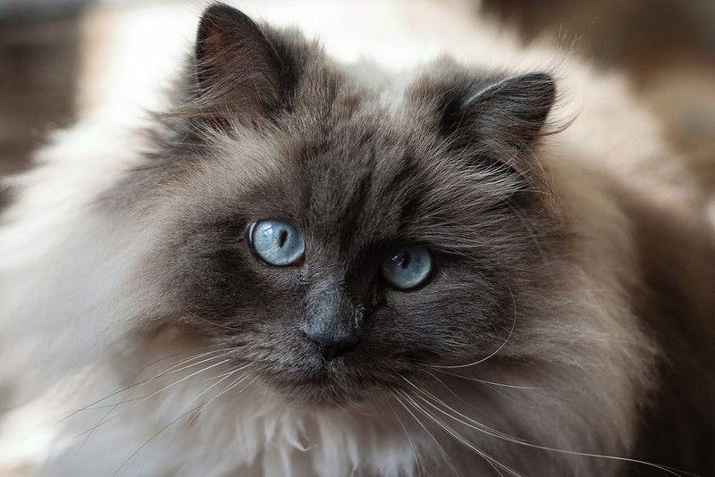 040409_cats_0009