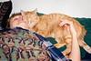 060114_cats_0045