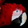 DallasZoo090812 Green Wing Macaw