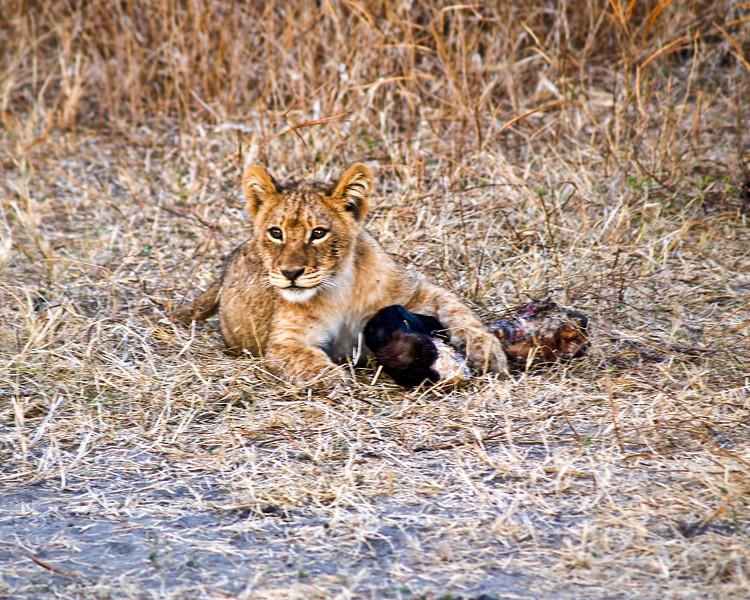 Snack Time<br /> Chobe Nationbal Park, Botswana