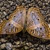 butterflyGravel