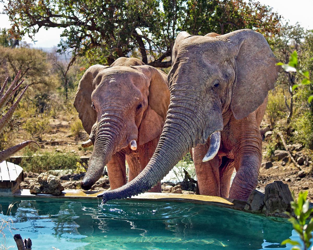 Elephant Cocktail