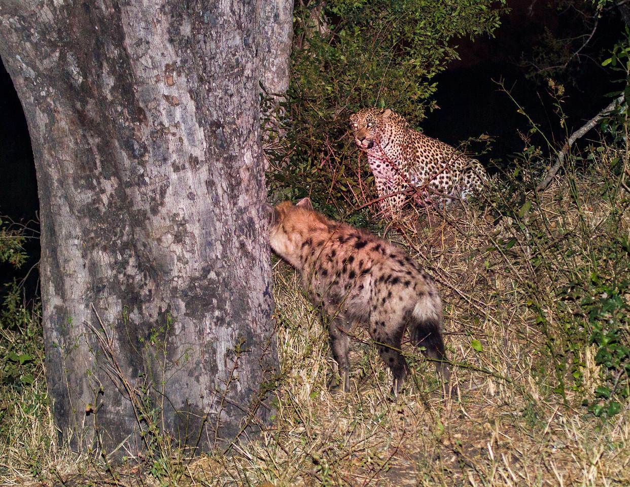 Ngala0715PM-8775 Leopard Hyena