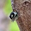 Woodpecker_0242-Edit-2