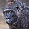 FWZ Gorilla Lady1