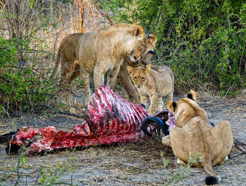 Lion Dinner Table