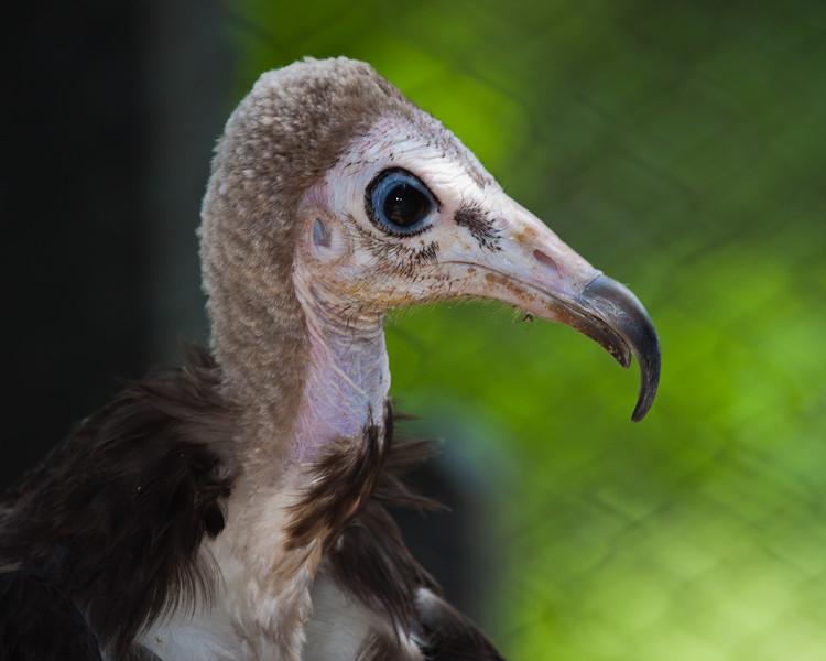 BirdsofPrey2011-9951