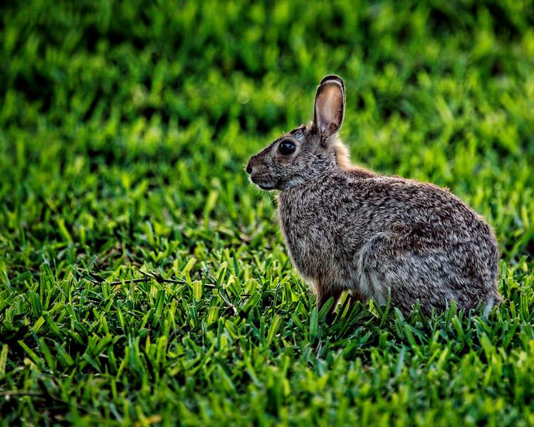 MEAD0175 (Spring Bunny)