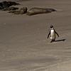 Waddling Penguin