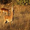 Browsing Impala