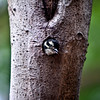 Woodpecker_0076-Edit