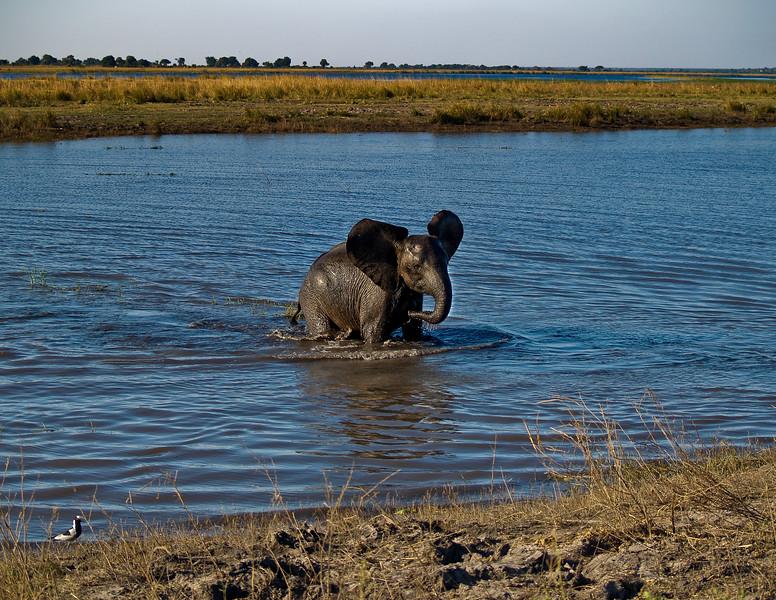Emerging Elephant