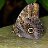 Resting Owl Eye-4589
