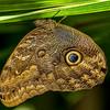 TexasDiscoveryGardens2013-0715 Owl Eye Palm Leaf