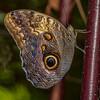 TexasDiscoveryGardens2013-0727 Owl Eye